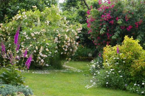 Деревья и кустарники декоративные