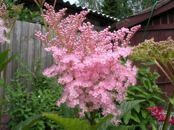 04 03 2012 крупный садовый цветок nat53 963 4 0