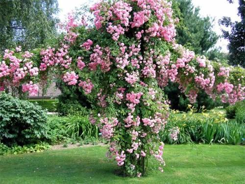 Садовые цветы однолетники садовые