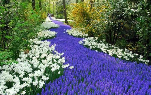 Садовые цветы фото и название