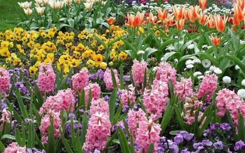 Многолетние садовые цветы названия