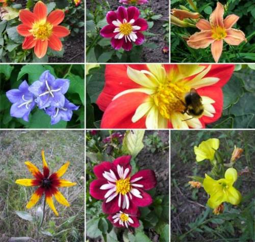 Садовые цветы оптом садовые цветы