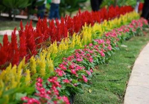 Садовые цветы садовые цветы