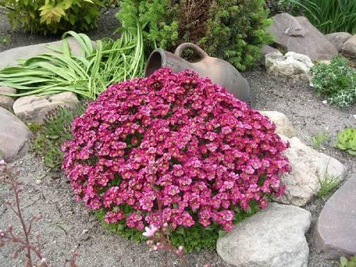 Садовый цветок названия