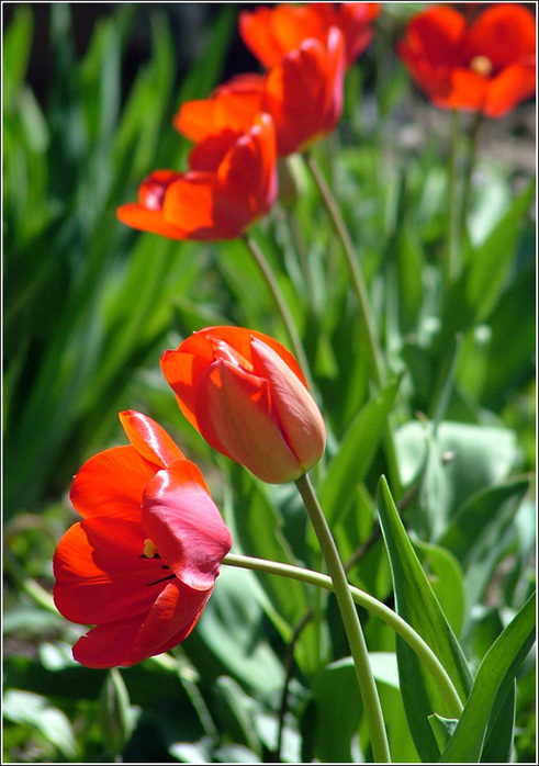 04 03 2012 садовые ампельные цветы nat53 590 0 0