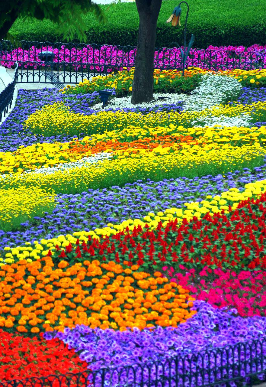 Садовые цветы фотоальбомы дизайн