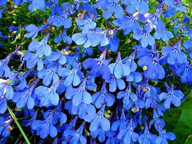 Комнатные цветы показать фото с названием
